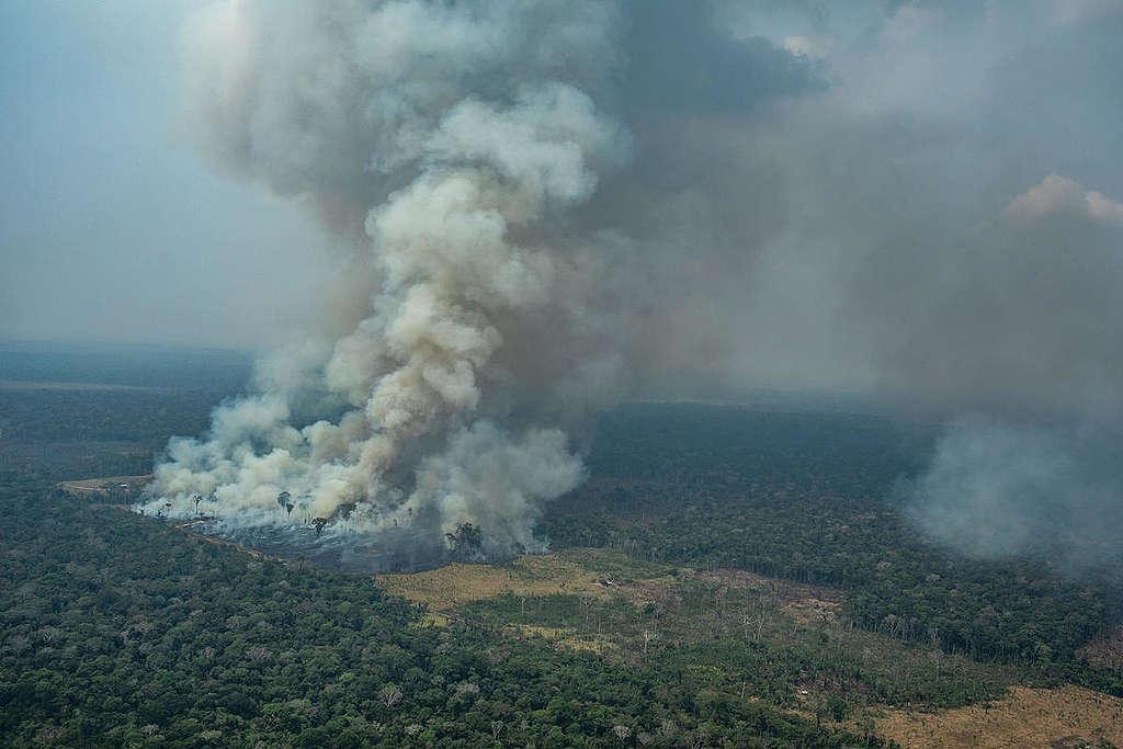 Forest Fires in Candeiras do Jamari, Amazon - Second Overflight (2019). © Victor Moriyama / Greenpeace