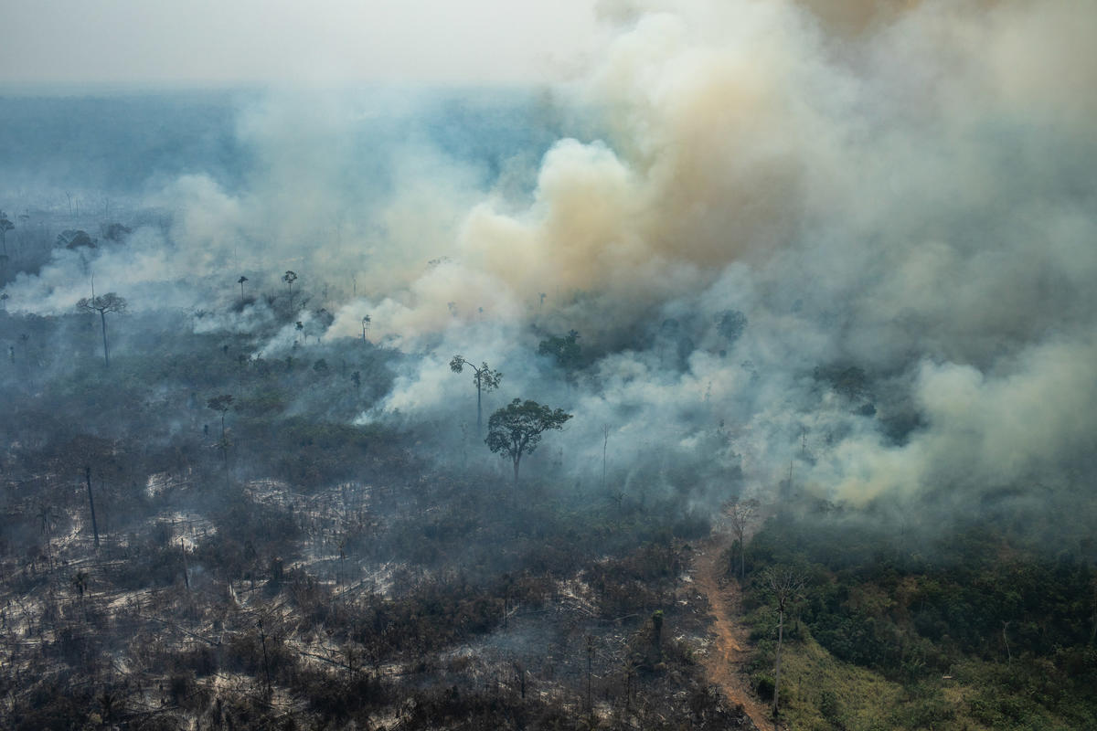 Forest Fires in the Amazon - Third Overflight (2019). © Victor Moriyama / Greenpeace