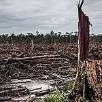 Rapor: Yağmur ormanları için geri sayım