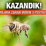 Başardık, arılara zarar veren üç pestisit yasaklandı