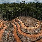 Palm yağı devinin yeni eylem planı ormansızlaşma sorununu çözmeyecek