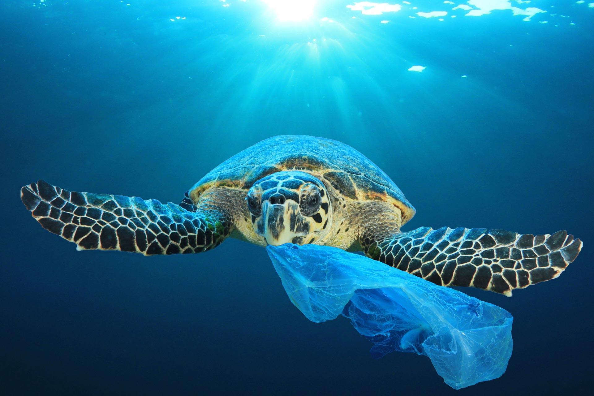 Plastik Kirliliğiyle Mücadeleye Devam Ediyoruz
