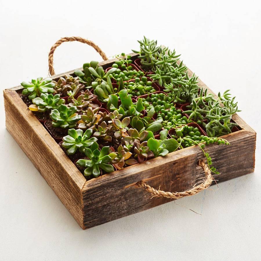 Reclaimed Wood Succulent Garden Tray