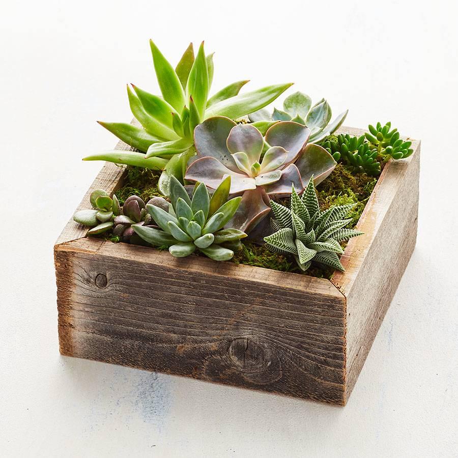Reclaimed Wood Succulent Garden