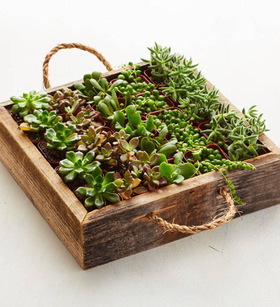 Reclaimed Wood Succulent Garden Tray