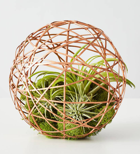 Geometric Ball Air Plant