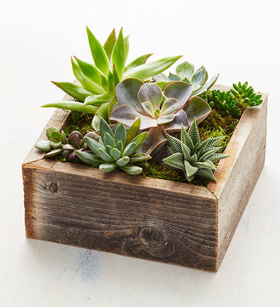 Reclaimed Wood Succulent Garden