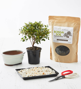 DIY Bonsai Kit