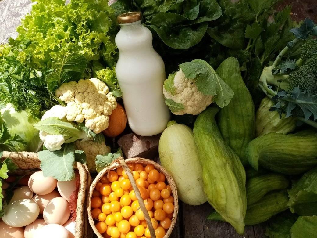 Mercado Agroecológico Santa Mónica