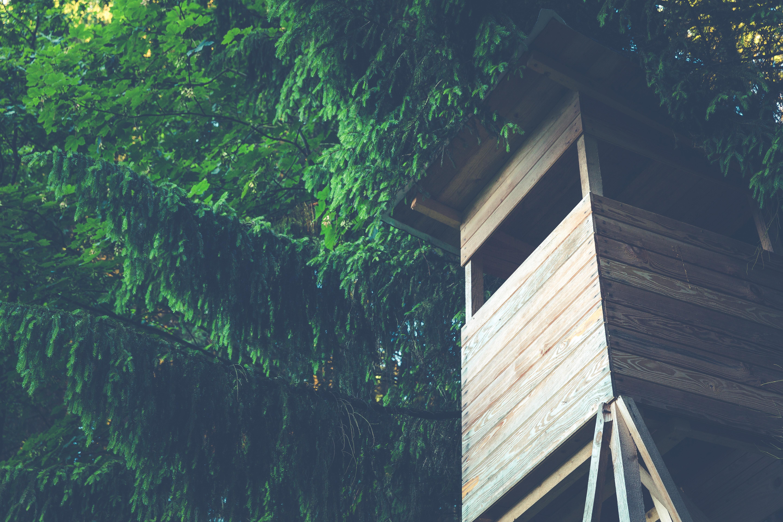 La casa del árbol de Julián