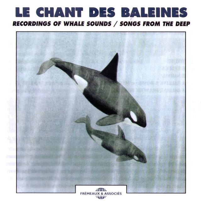 Le chant des baleines - Recordings of Whale Sounds