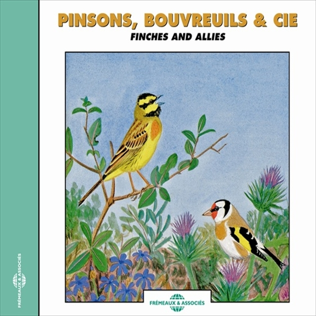 Pinsons bouvreuils - Finches and Allies & Co
