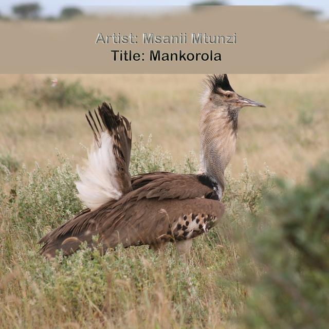 Mankorola