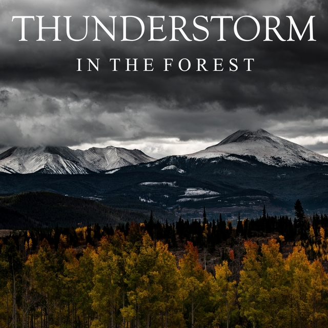 Thunderstorm in the Forest