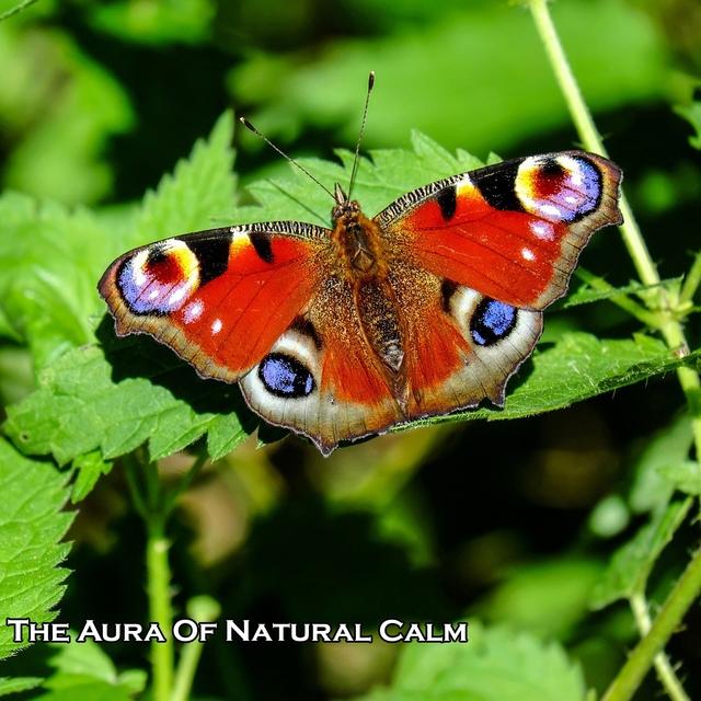 The Aura Of Natural Calm