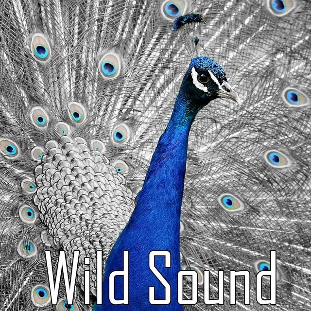 Wild Sound