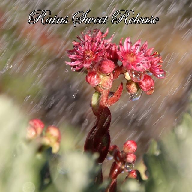 Rains Sweet Release
