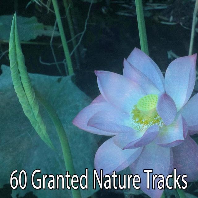 60 Granted Nature Tracks