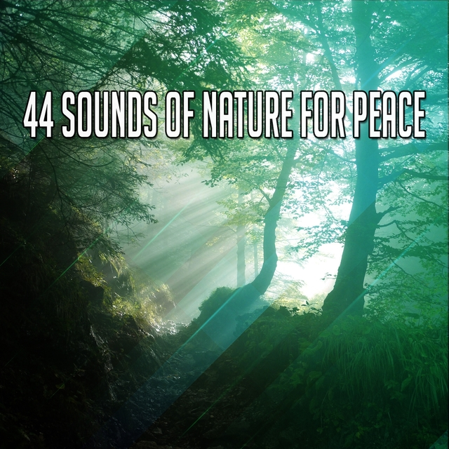 44 Sounds Of Nature For Peace