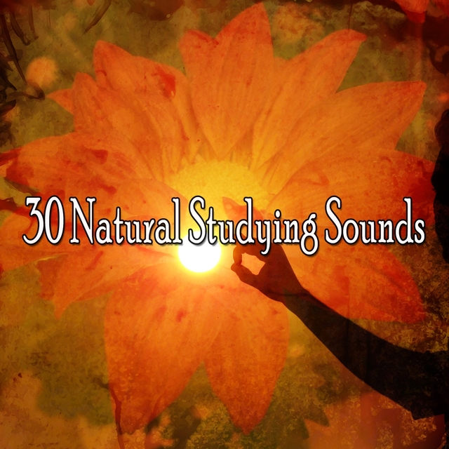 30 Natural Studying Sounds