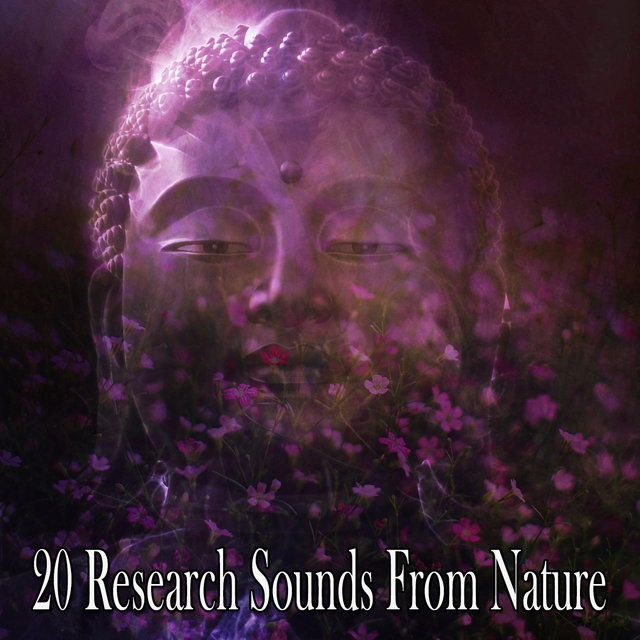 20 Research Sounds From Nature