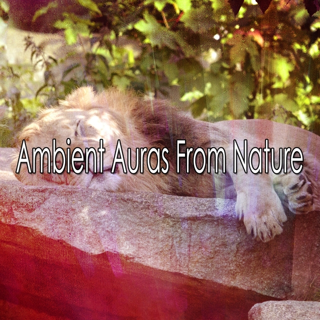 Ambient Auras From Nature