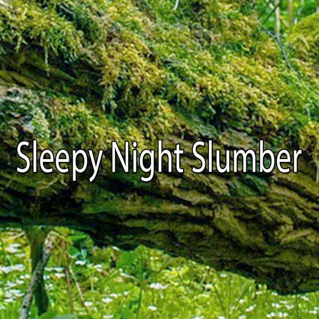 Sleepy Night Slumber