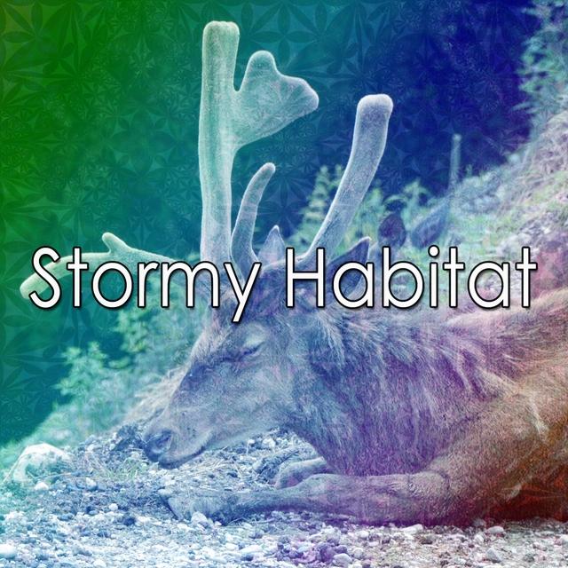 Stormy Habitat