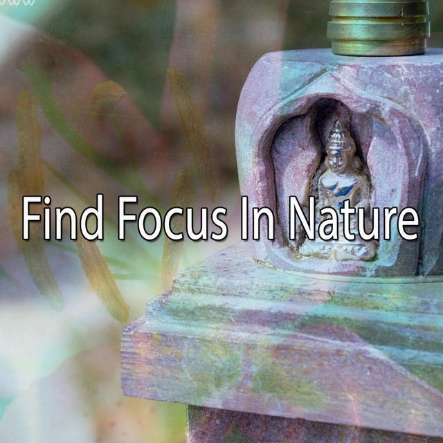 Find Focus In Nature