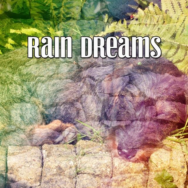 Rain Dreams