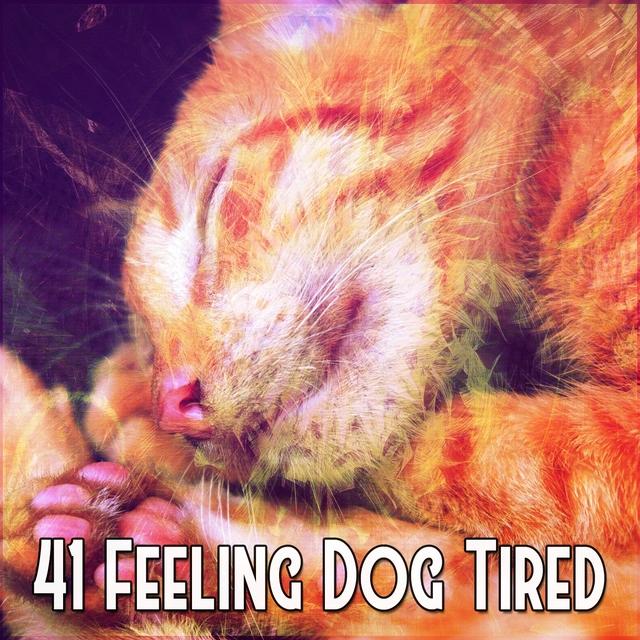 41 Feeling Dog Tired