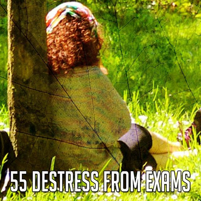 55 Destress from Exams