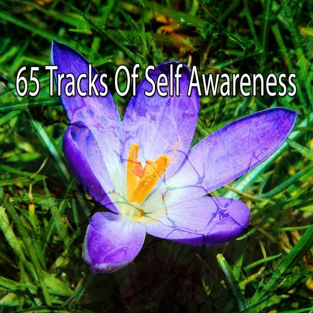 65 Tracks of Self Awareness
