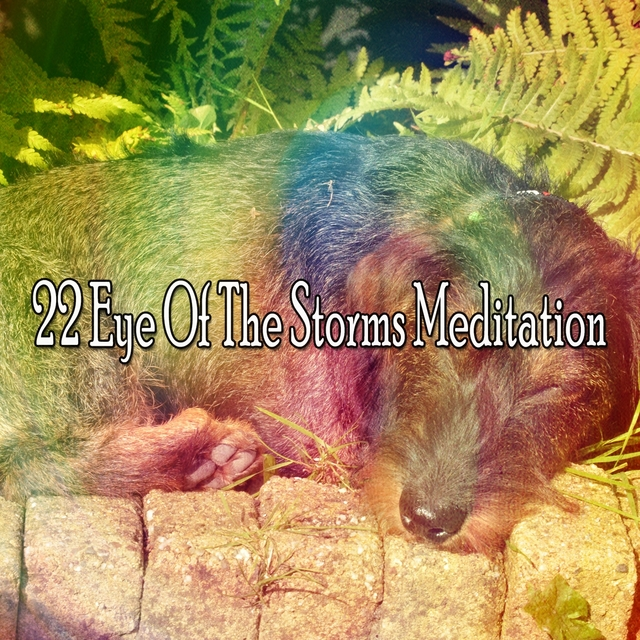 22 Eye of the Storms Meditation