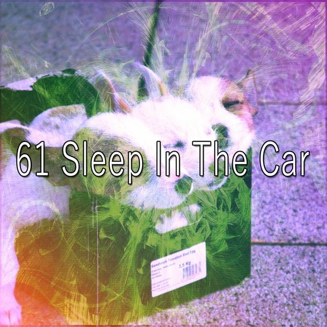 61 Sleep in the Car