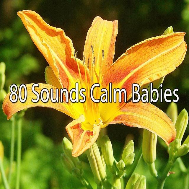 80 Sounds Calm Babies