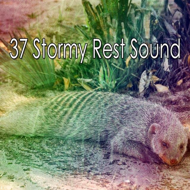 37 Stormy Rest Sound