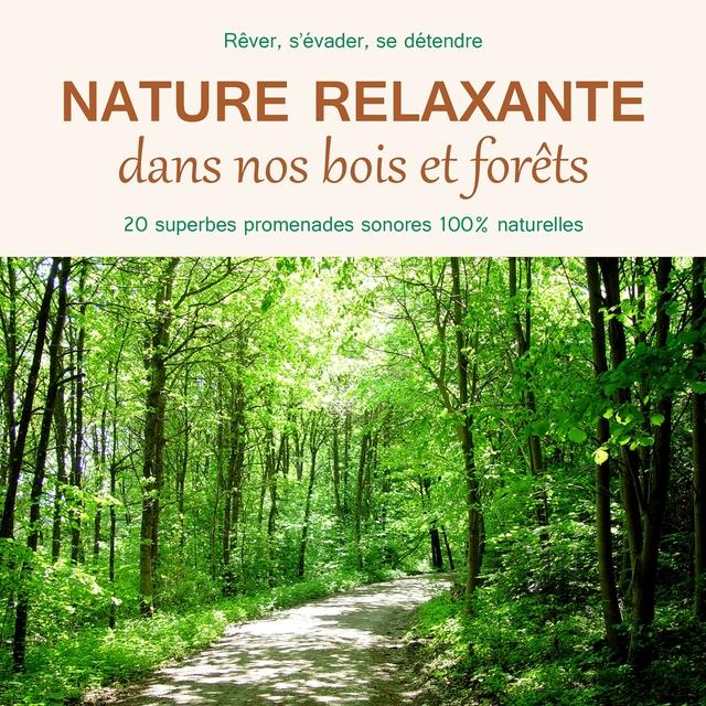 Nature relaxante dans nos bois et forêts