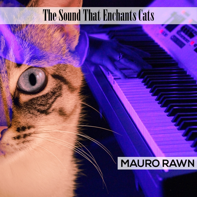 The Sound That Enchants Cats