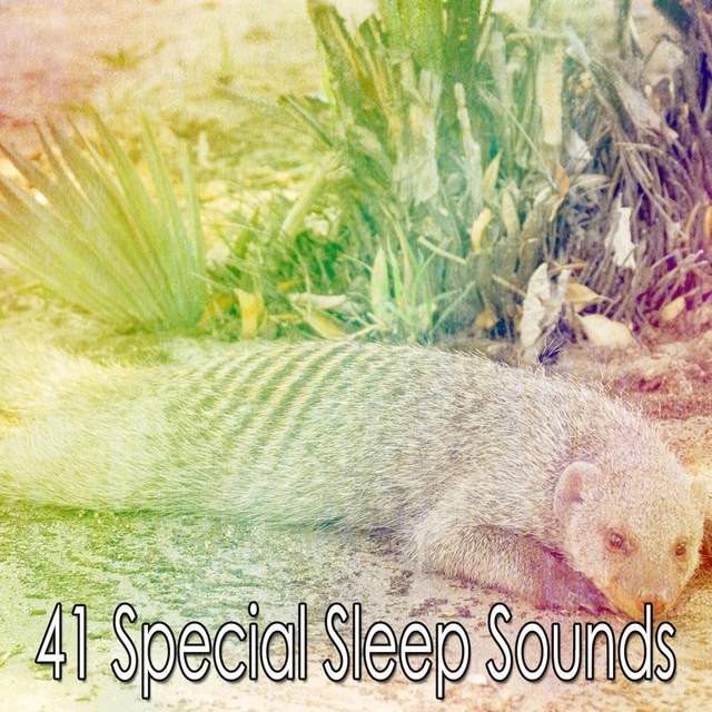 41 Special Sleep Sounds
