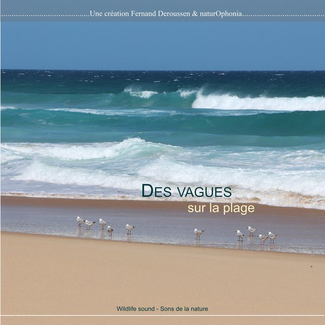 Naturophonia: Des vagues sur la plage