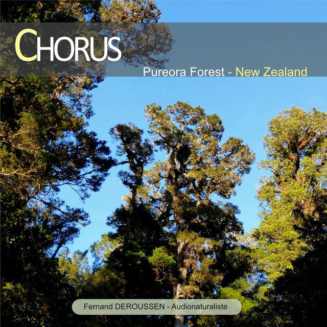 Chorus: Pureora Forest (New Zealand)