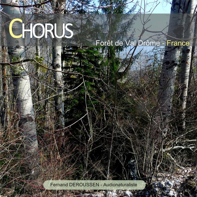 Chorus : Forêt de Valdrôme (France)
