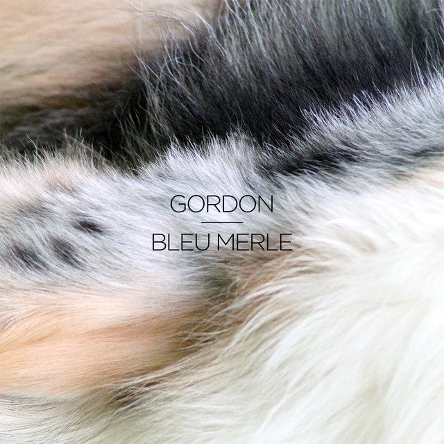 Couverture de Bleu merle - EP