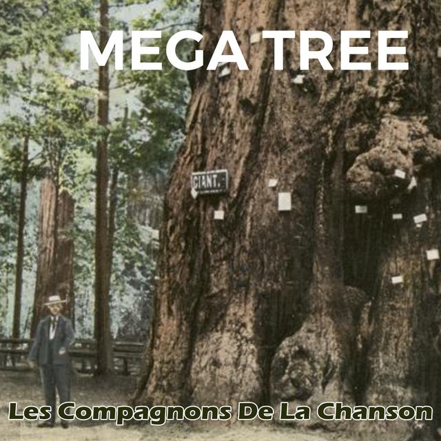 Couverture de Mega Tree