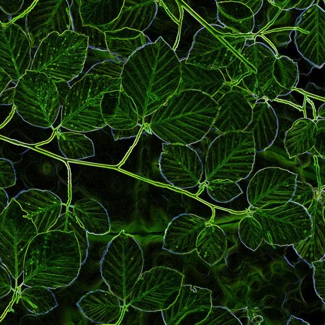 Couverture de Green Wood