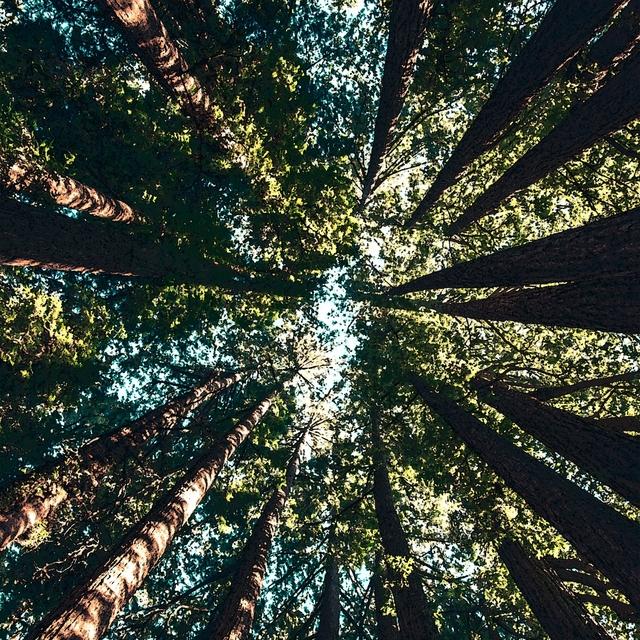 Couverture de Power Trees