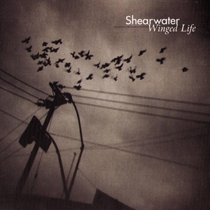 Winged Life | Shearwater