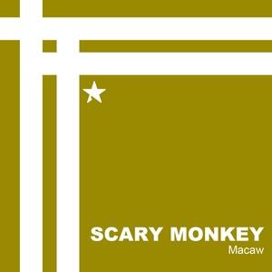 Macaw   Scary Monkey