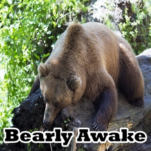 Bearly Awake | Musica para Dormir Dream House